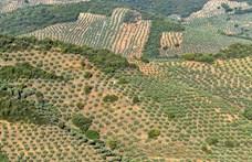 A borászat és az olívatermelés miatt pusztulnak a veszélyeztetett madarak élőhelyei