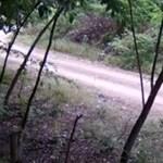 Állati maradványokat dobott az erdőbe egy férfi, mindent felvett a kamera