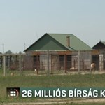El kellett bontani az engedély nélkül épített önkormányzati kecskefarm egy részét Pocsajon