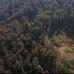 Vágják a fákat egy védett területen Veszprém megyében