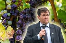 Itt van a NER új bora, Mészáros Lőrinc tokaji furmánya