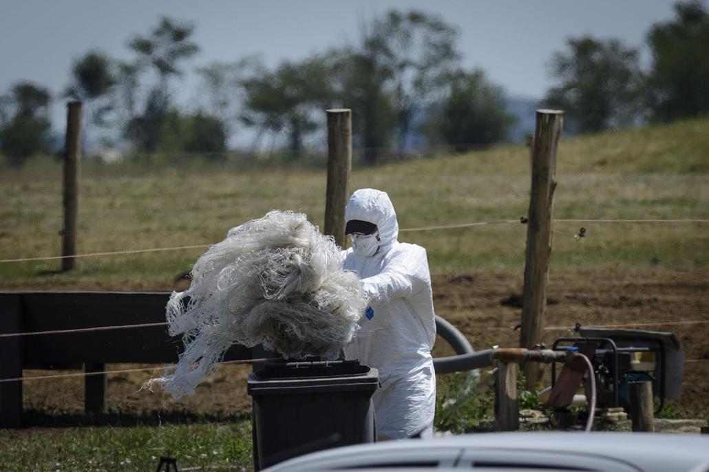 mti.14.07.04. - Tiszafüred: lépfenefertőzés gyanúja Tiszafüreden, öt ember került kórházba