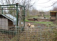 Kutyaviadal-szervezőkön ütött rajta a TEK