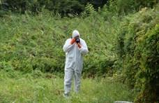 Holttestet találtak egy balatonfűzfői ház udvarán