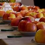 Megalkották az új magyar almát, egyből 15-félét