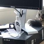 A világ legcukibb betörőjét érték tetten egy irodában