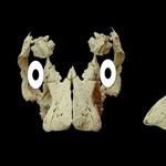 Meglepő állapotban találtak rá egy 80 millió éves titanoszaurusz-embrióra