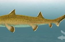 2,5 méteres őscápára bukkantak, ez lehetett a mai cápák és ráják őse
