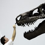 Csempészett dinoszaurusz-csontvázat vásárolt Nicolas Cage