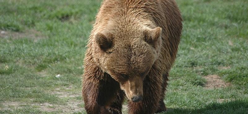 Kijárási tilalom medvék miatt