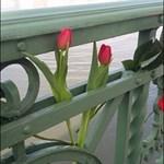 Geréb Ágnesért borult virágba a Szabadság híd
