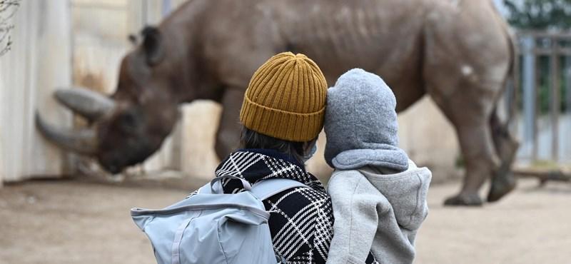 Közzétette újranyitási tervét a fővárosi állatkert