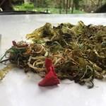 Ennyi műanyagszemét volt a végül elpusztult teknős gyomrában