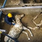 Különleges lelet: felszerszámozott lovat találtak Pompeji romjai között