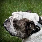 Szupernyakörv a szétszórt kutyatulajdonosoknak