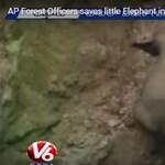 Videó: végül csak sikerült kimásznia a kiselefántnak szorult helyzetéből