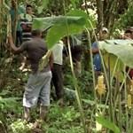 Egy vallási szektához kapcsolható az a tömegsír, amelyet Panamában fedeztek fel