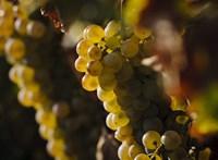 Dobja a Laposa borokat egy budapest kávézó, miután fény derült a borász ügyeskedésére