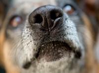 Légpuskával lőtte meg a szomszéd kutyáját, felfüggesztettet kapott