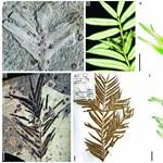 160 millió éves növény maradványaira bukkantak Kínában