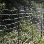 Tüzelőt csinálnak a határzárból kimaradt faanyagból