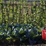 Megszüntetné az agrárkamara a családi gazdaságokat