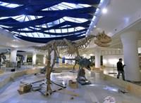 Index: Debrecenbe költöztethetik a természettudományi múzeumot