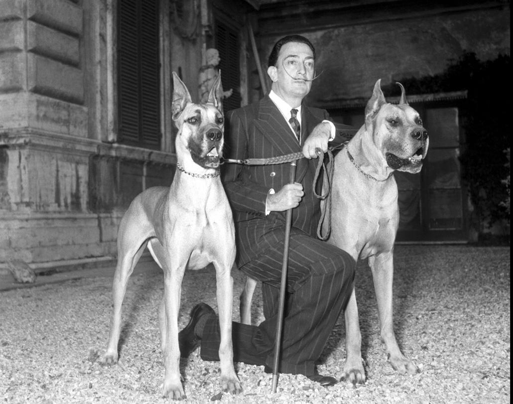 afp. nagyítás - Salvador Dali 110 éve született - Rome, 29/04/1954 l'artiste espagnol Salvador Dali lors de l'installation de son exposition au palais Pallavicini Rospigliosi Il pose avec ses deux chiens ©Farabola/Leemage