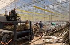 Közel hatvanmilliárd forintnyi beruházás a kertészetekben