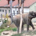 Elefántházzal bővül az állatkert