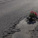 A nap fotója: A virágkommandó ezúttal egy régi piliscsabai kátyúra csapott le
