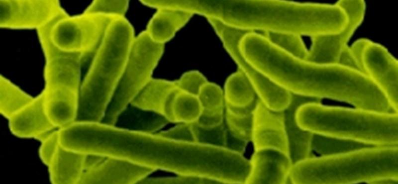 Fertőző TBC-s dolgozott egy óbudai bölcsődében, sok gyereket kivizsgáltak