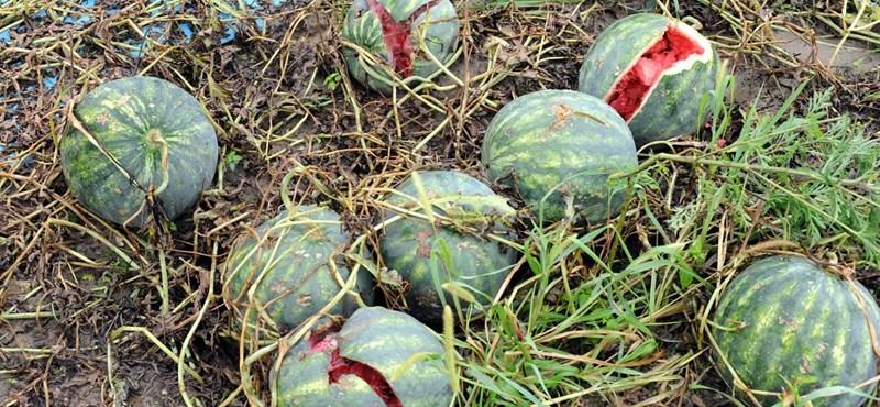 Augusztus közepéig kérhetnek támogatást a fagykárt szenvedett gazdák