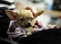"""Bezártak egy """"kutyagyárat"""" Madridban"""