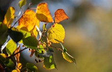 Napos hétvégével folytatódik a nyárias ősz