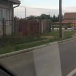 Visszatérhetett Magyarországra Robi, a medve - videó