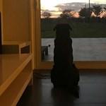 Emiliano Sala kutyája még mindig hazavárja gazdáját - fotó