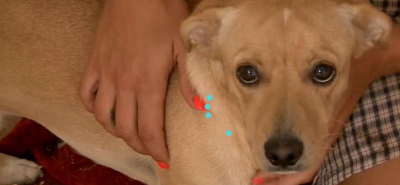 Légpuskával lőttek kutyára Szekszárd belvárosában