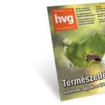 Hamvay Péter: Kiszorítósdi
