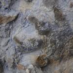 Dinoszaurusz-lábnyomok igazi kincsesbányájára bukkantak
