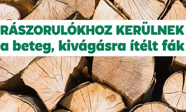 Rászorulókhoz adják a II. kerületben a kivágásra ítélt fákat