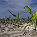 Óriási baj van a mezőgazdaságban – mi lesz így az árakkal?