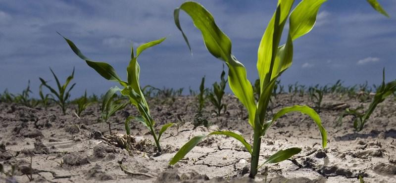 Megállíthatatlanná válik a klímaváltozás, ha nem teszünk rendet a talajban