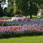 Ősfás andalgás, kakaóbab és Eiffel, Petőfi és a rózsakirály – tavaszi túraajánló hétvégére