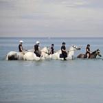 Fotó: lovakkal hűsölnek a tengerben a rendőrök