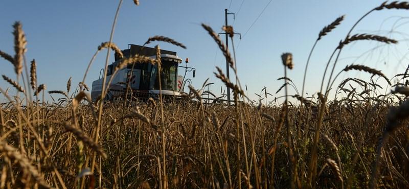 Vendégmunkásokkal mentené a kormány a mezőgazdaságot