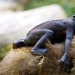 Veszélyeztetett állatfajokról festett egészen különleges képeket egy walesi művész - fotó