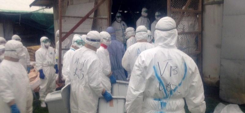 Madárinfluenza: minden tyúkot leöltek egy máramarosi farmon