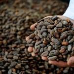 Drágább lehet a csokoládé a kakaókartell miatt