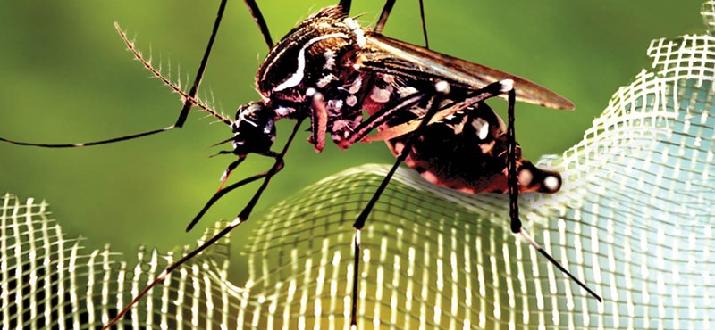 Kutatók mondják: Skrillex karistoló dubstepje elriasztja a szúnyogokat
